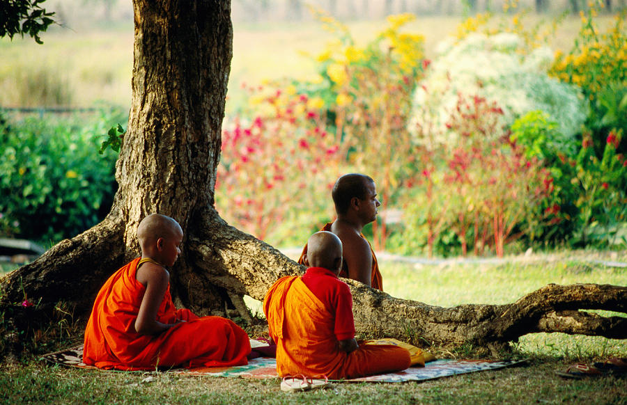 Buddhist Monks At Meditation Under Tree Photograph by ...