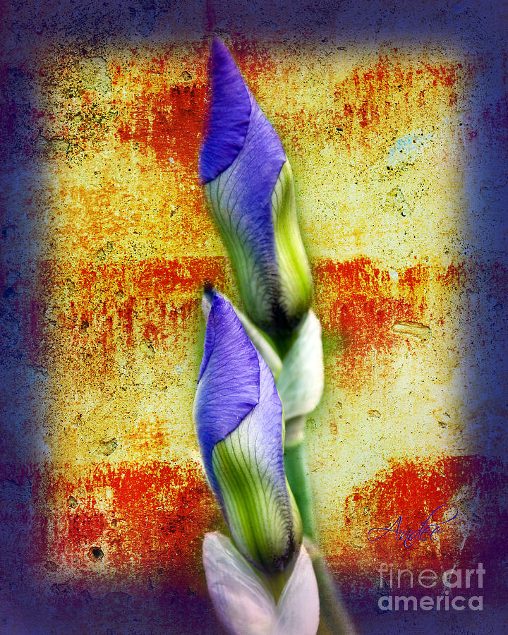 Purple. Iris. Buds Photograph - Buddies by Andee Design