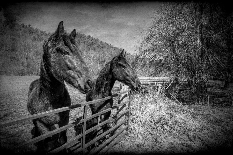 Black And White Photograph - Buddies by Christine Annas