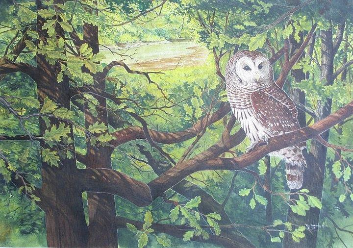 Barred Owl Painting - Buffalo River Barred Owl by Bill Gehring