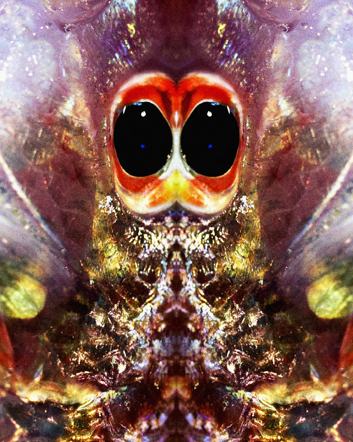 Abstract Photograph - Bug Eyes by Skip Nall