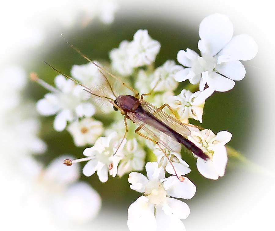 Park Bugs Photograph - Bug On White by Maureen  McDonald
