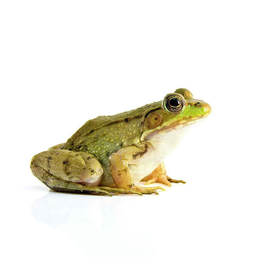 Bullfrog Art | Fine Art America