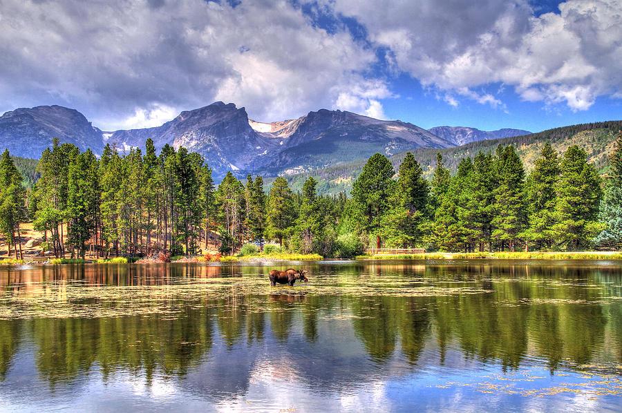 Colorado Photograph - Bull Moose Wading by Scott Mahon
