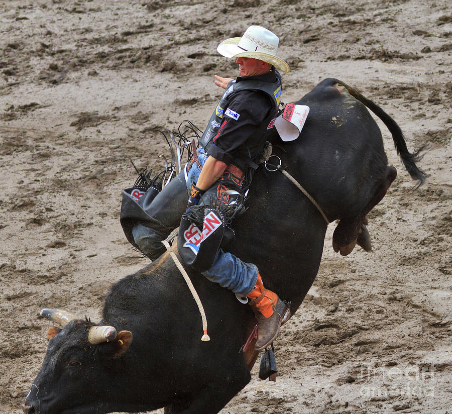 Bull Riding Photograph By Louise Heusinkveld