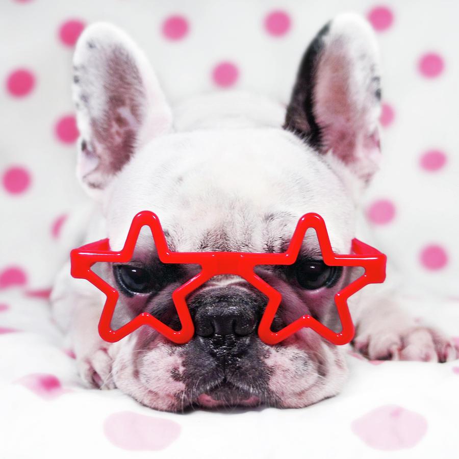 Square Photograph - Bulldog With Star Glasses by Retales Botijero