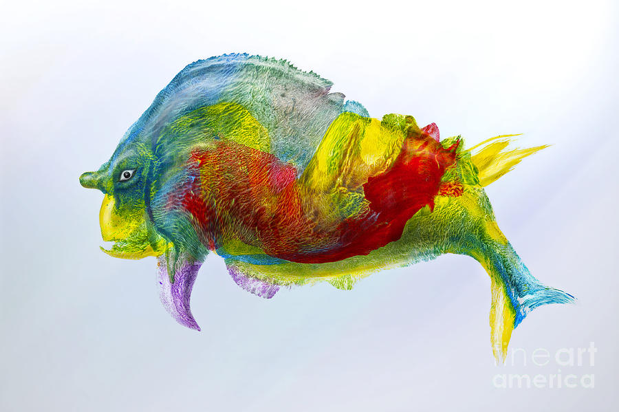 Fish Digital Art - Bullfish by Silvio Schoisswohl