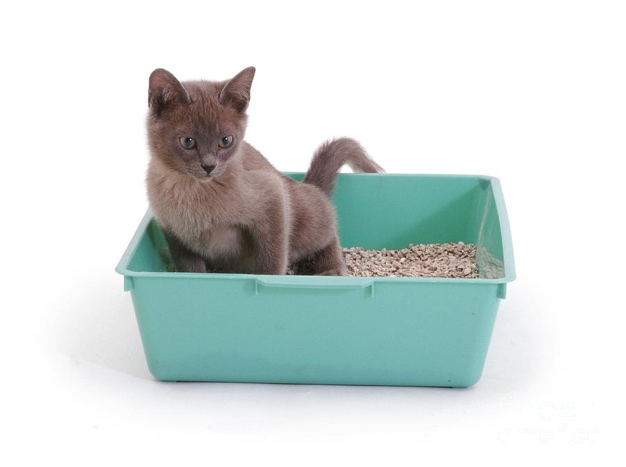 Cat Litter Box In Shower