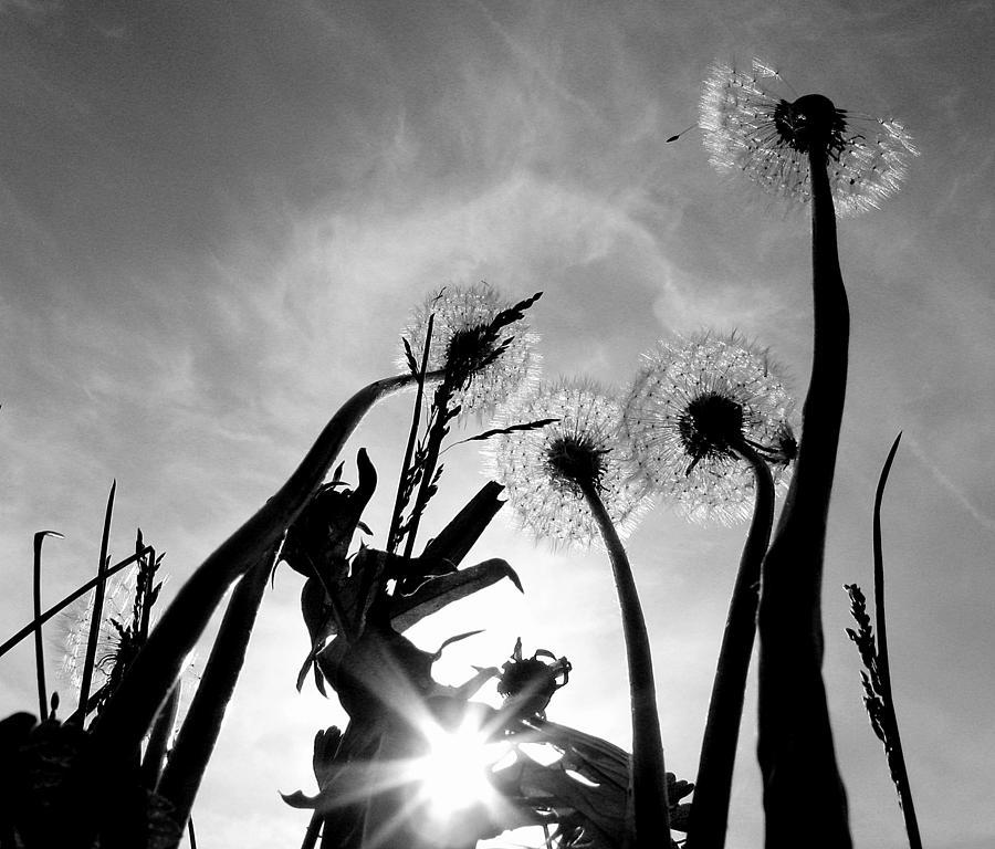 Flower Photograph - Burn B-w by Ioana Geacar