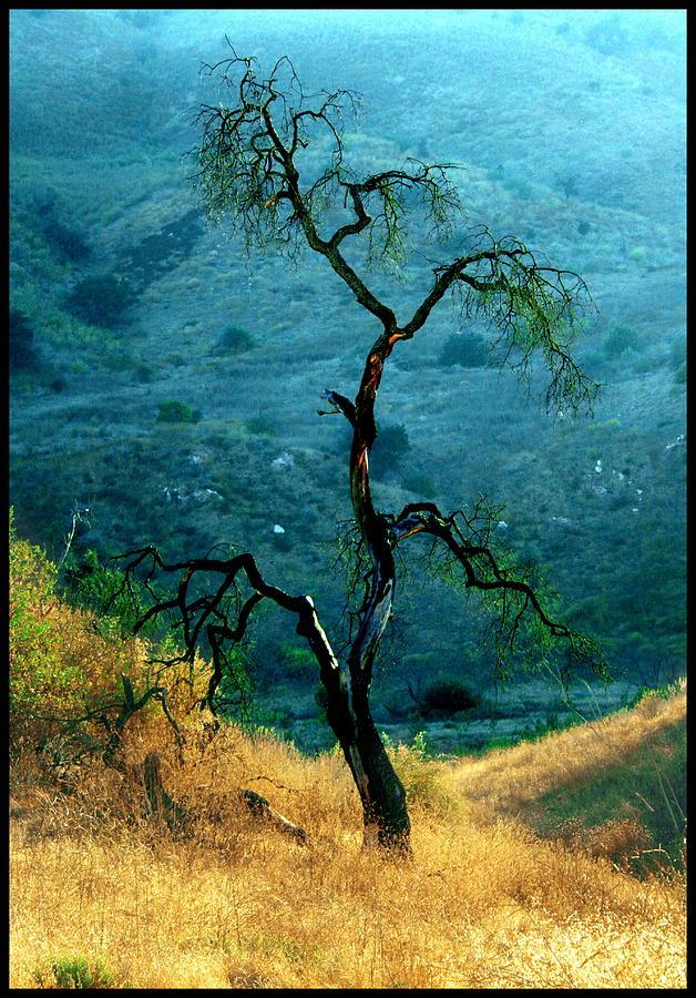 Oak Tree Digital Art - Burned Oak Tree Calabasas by Noah Brooks