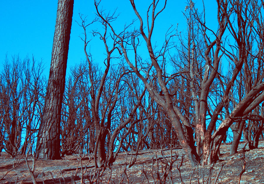 Nature Photograph - Burned Trees And The Sky by Naxart Studio
