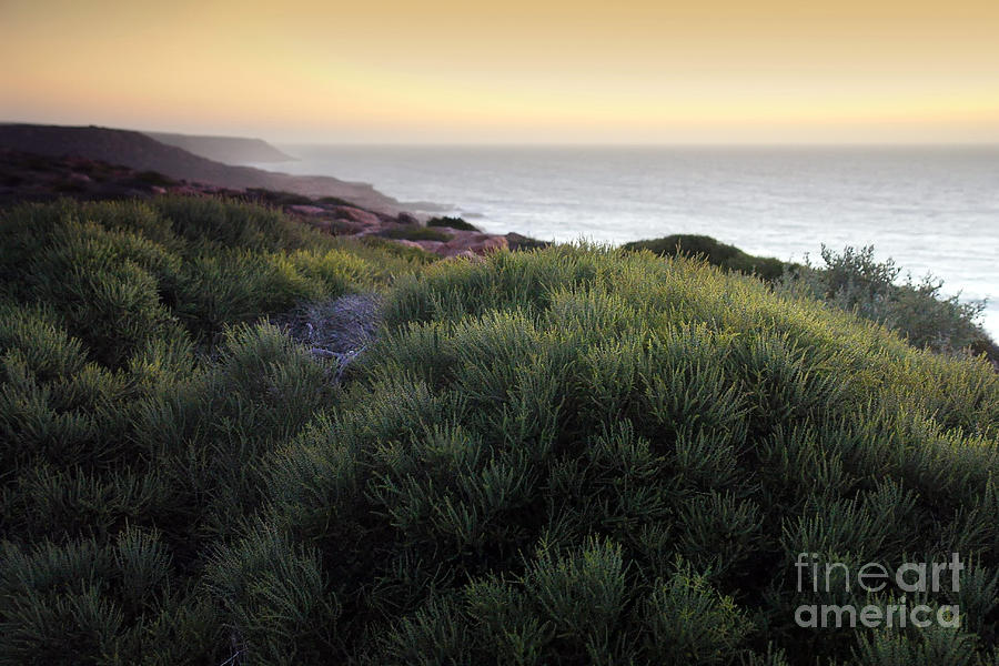 Sunset Photograph - Bush At Twilight by Roberto Bettacchi