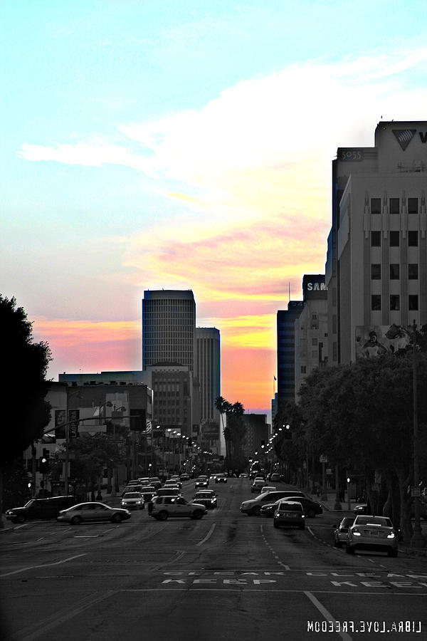 City Of Angels Photograph - Busy Backyard by D Wash