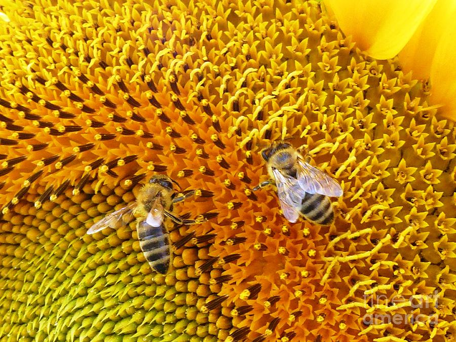 Bee Photograph - Busy Bees by AmaS Art