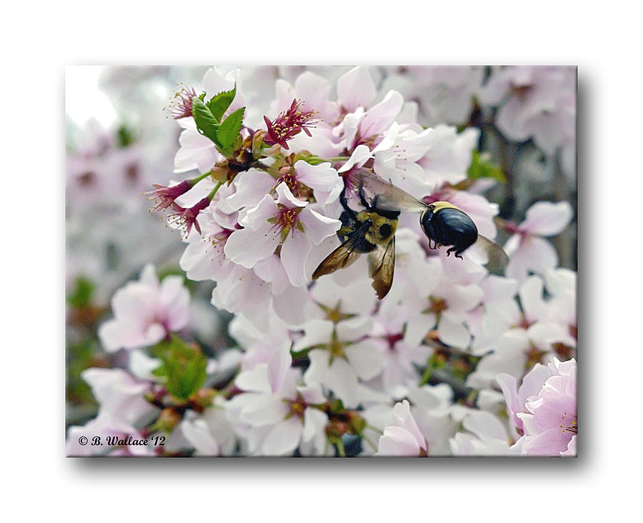 2d Photograph - Busy Bees by Brian Wallace