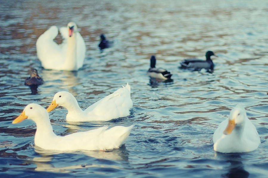 Pond Photograph - Busy Pond by Andrey Kopot