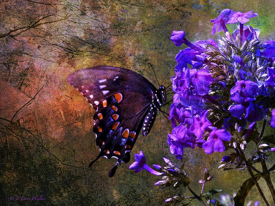 J Larry Walker Digital Art - Busy Spicebush Butterfly by J Larry Walker