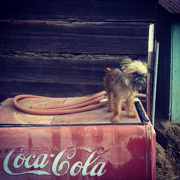 Antique Photograph - But Im A Louis And Louis Puppies by Caitlin Schmitt