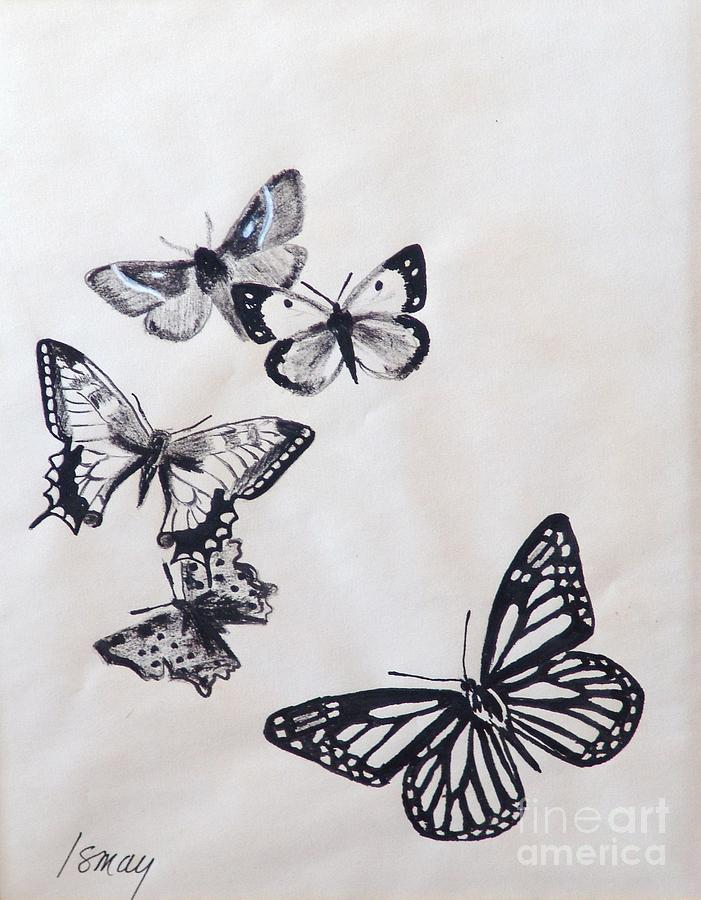 butterflies and moths drawing by rod ismay