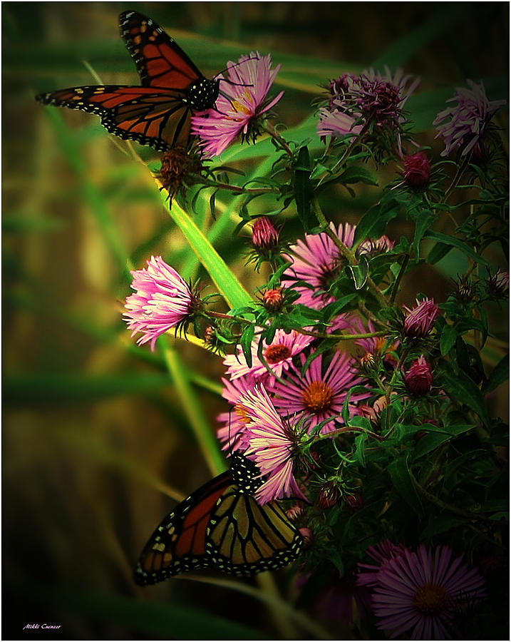 Butterflies And Wildflowers Photograph