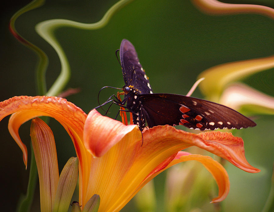 Happy Photograph - Butterflies Are Free... by Arthur Miller