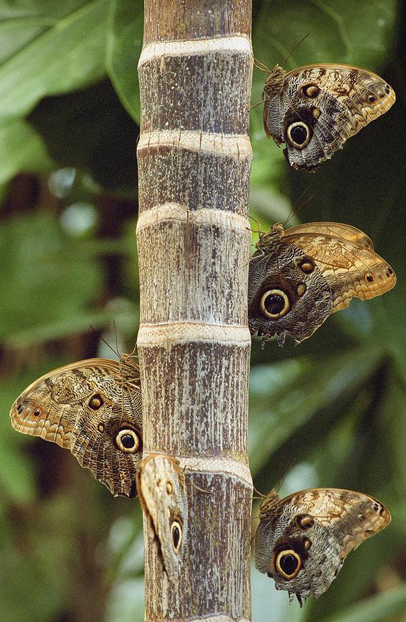 Outdoors Photograph - Butterflies by Bilderbuch