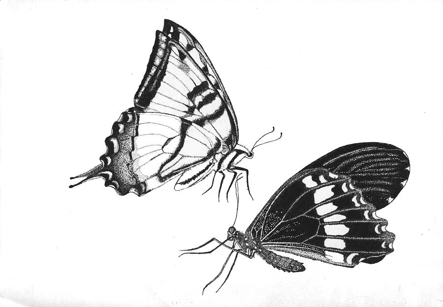 Butterflies Drawing By Naveen Chhabria