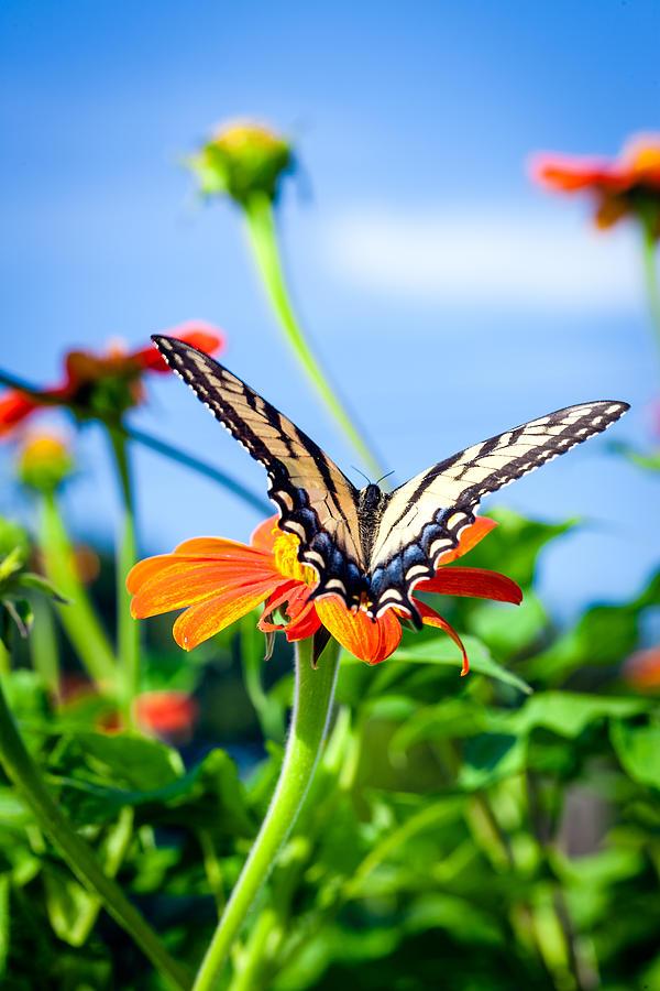 Butterfly Photograph - Butterfly -1 by Alhaji Samura