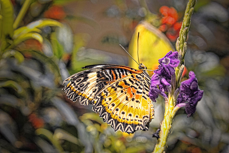 Butterfly Photograph - Butterfly 3 by Nathan Firebaugh