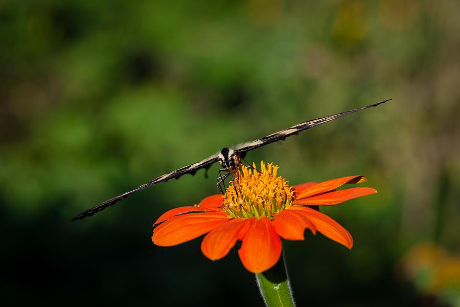 Butterfly Photograph - Butterfly -4 by Alhaji Samura