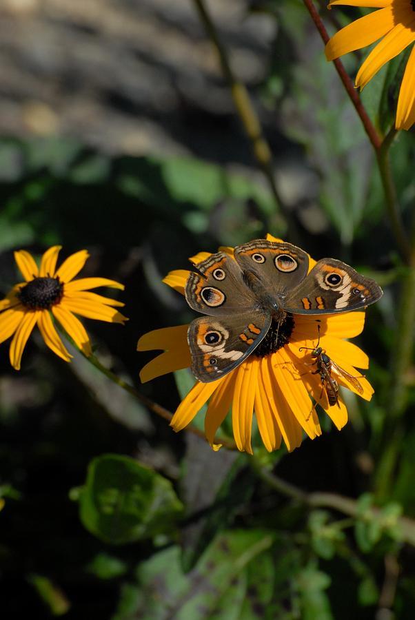 Butterfly Photograph - Butterfly 90 by Joyce StJames