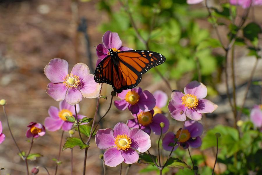Butterfly Photograph - Butterfly 91 by Joyce StJames