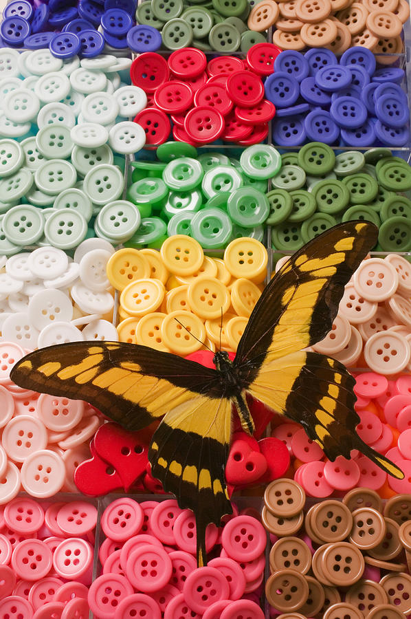 Butterfly Photograph - Butterfly And Buttons by Garry Gay