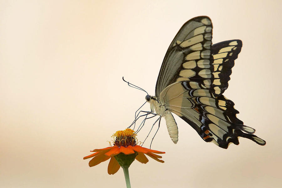 Butterfly Photograph - Butterfly And Flower by Jason Smith