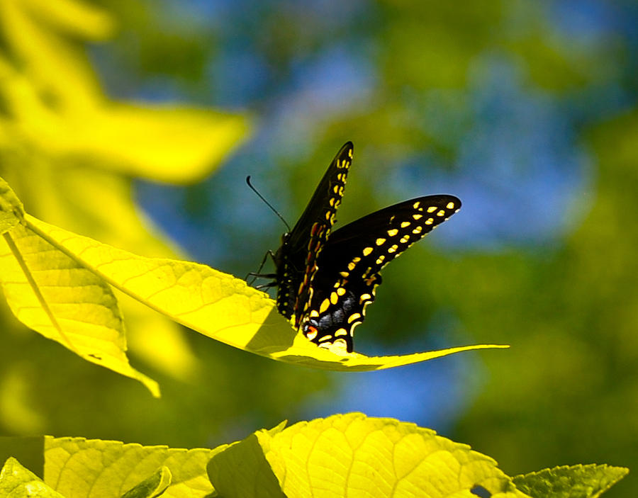 Landscape Photograph - Butterfly Beauty by Erica McLellan
