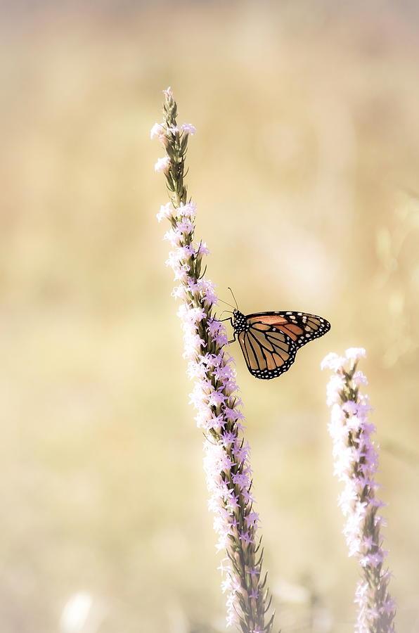 Butterfly Photograph - Butterfly by Bill Martin