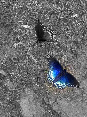 Butterfly Blues Photograph by Deb  Julie Scherff