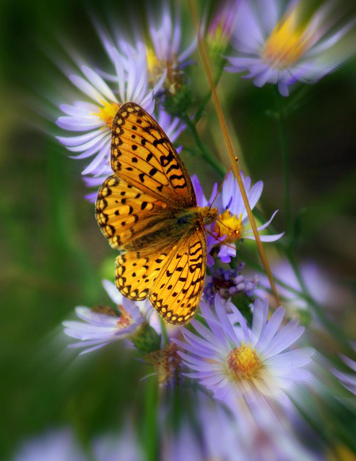 Butterfly Photograph - Butterfly Blur by Marty Koch