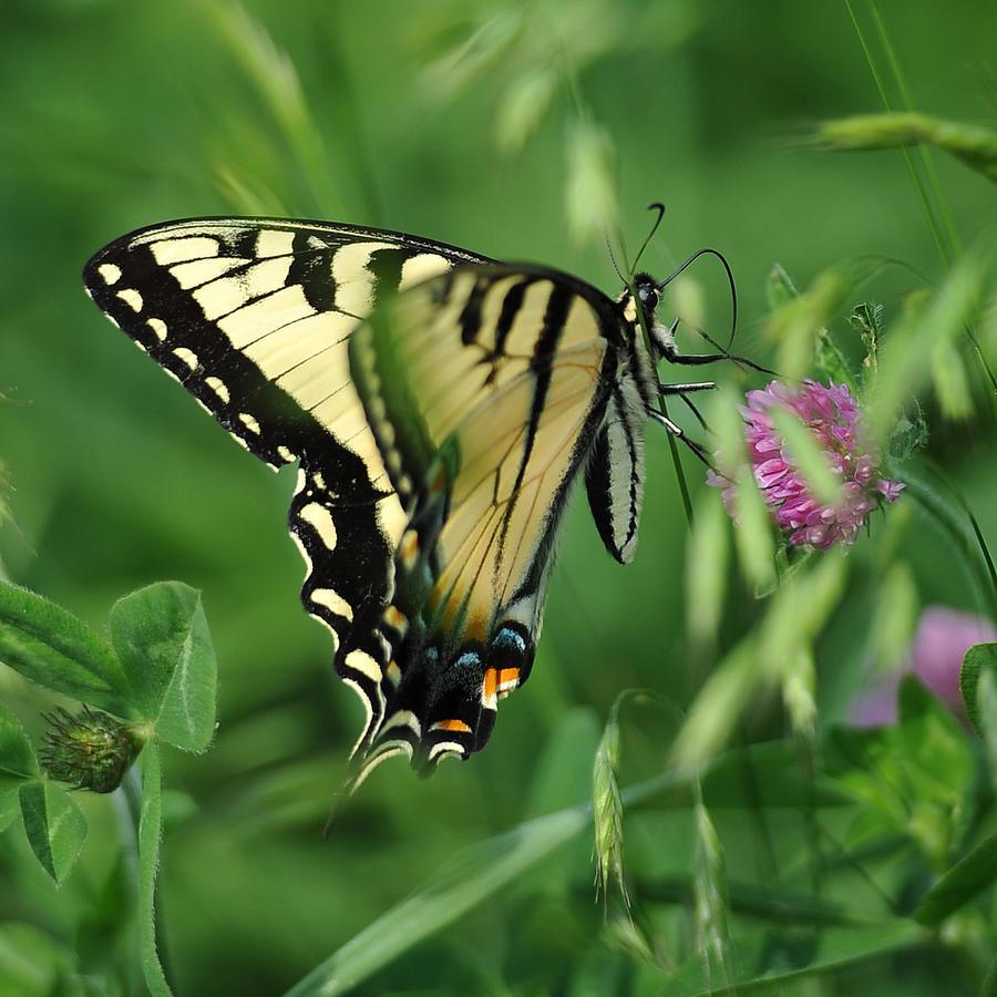Butterfly Photograph - Butterfly by Brian Mollenkopf