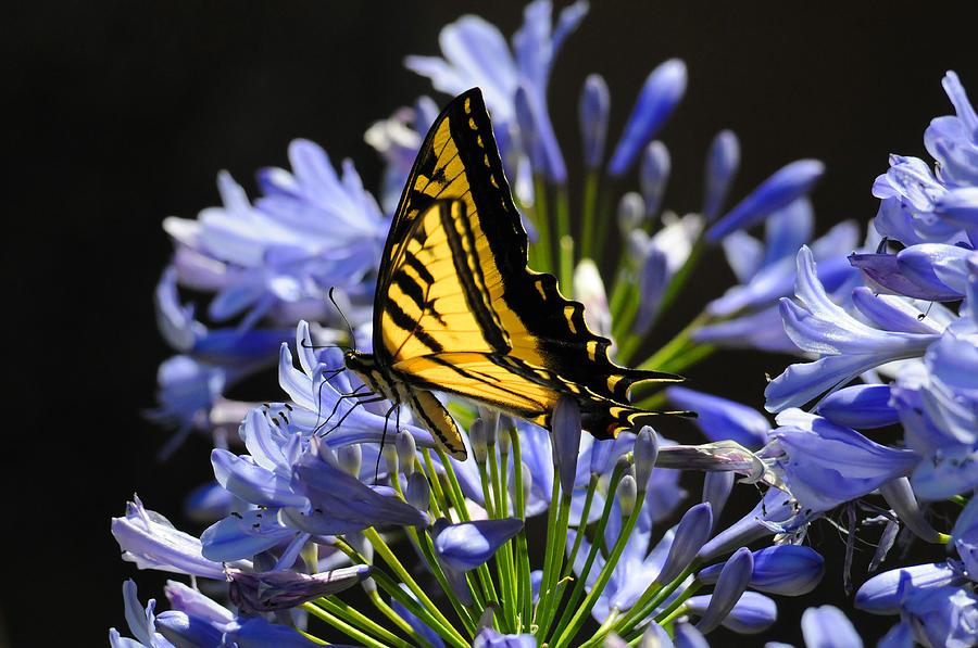 Butterflies Photograph - Butterfly Catcher by Lynn Bauer