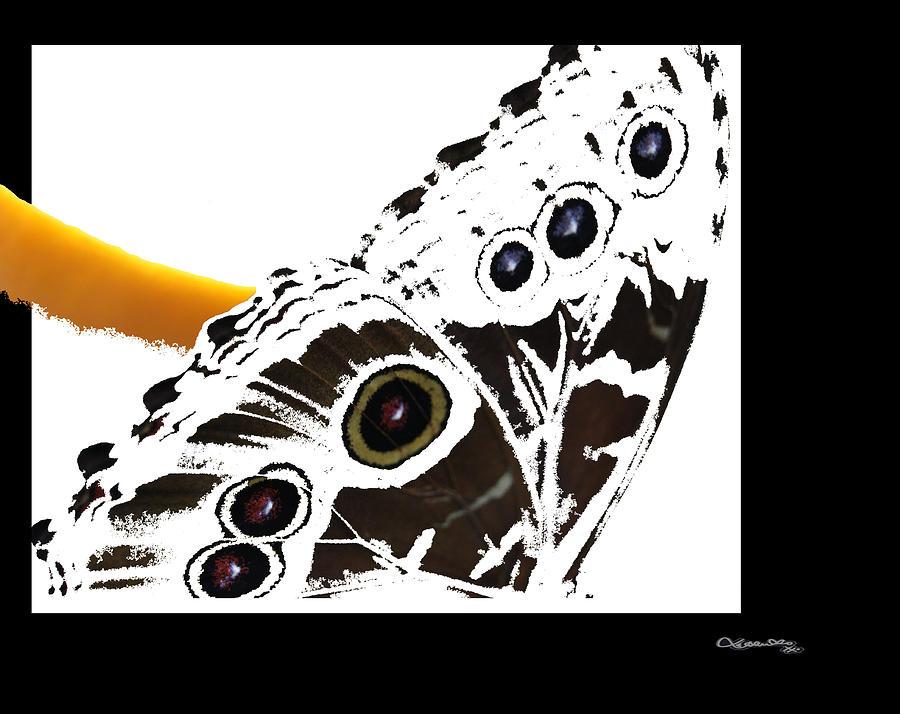 Butterfly Digital Art - Butterfly Dream by Xoanxo Cespon