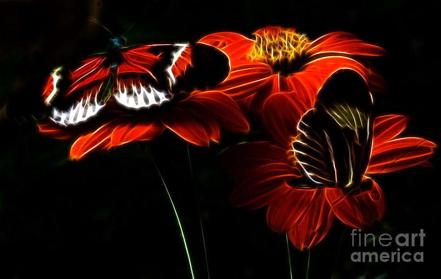 Butterfly Photograph - Butterfly Duet by Darleen Stry
