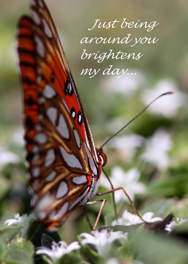 Friends Photograph - Butterfly Friendship Card by Travis Truelove