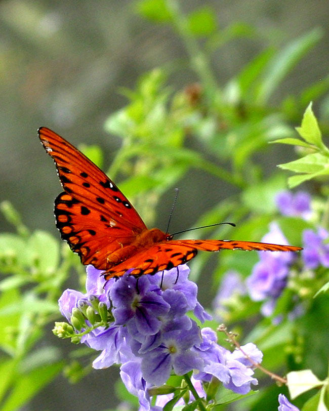Butterfly Photograph - Butterfly Garden by Carol Holland