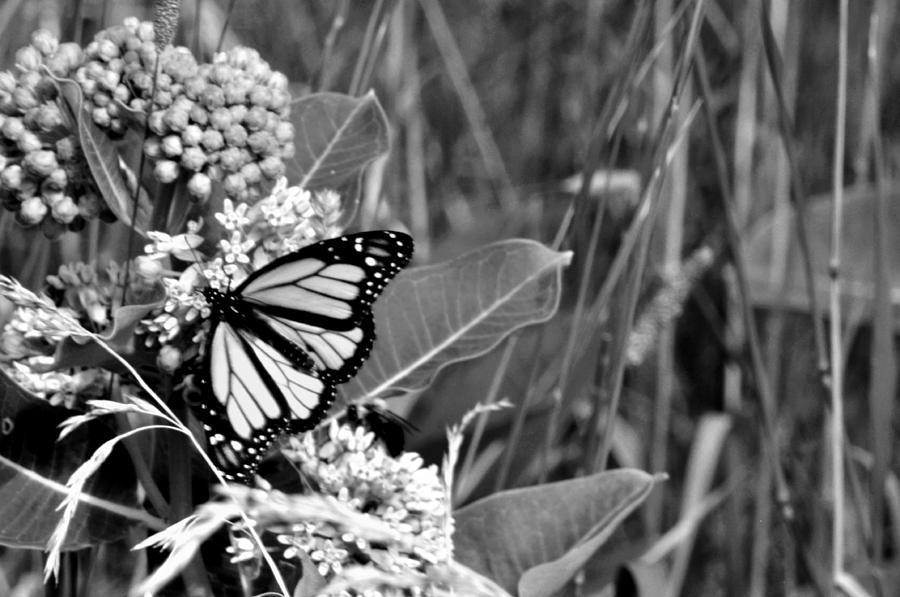 Landscape Photograph - Butterfly In Black by Helen Haw