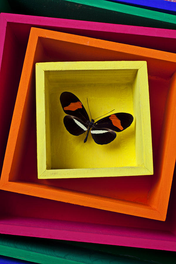 Butterfly Photograph - Butterfly In Box by Garry Gay