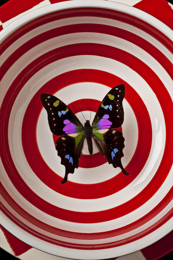 Butterfly Photograph - Butterfly In Circle Bowl by Garry Gay