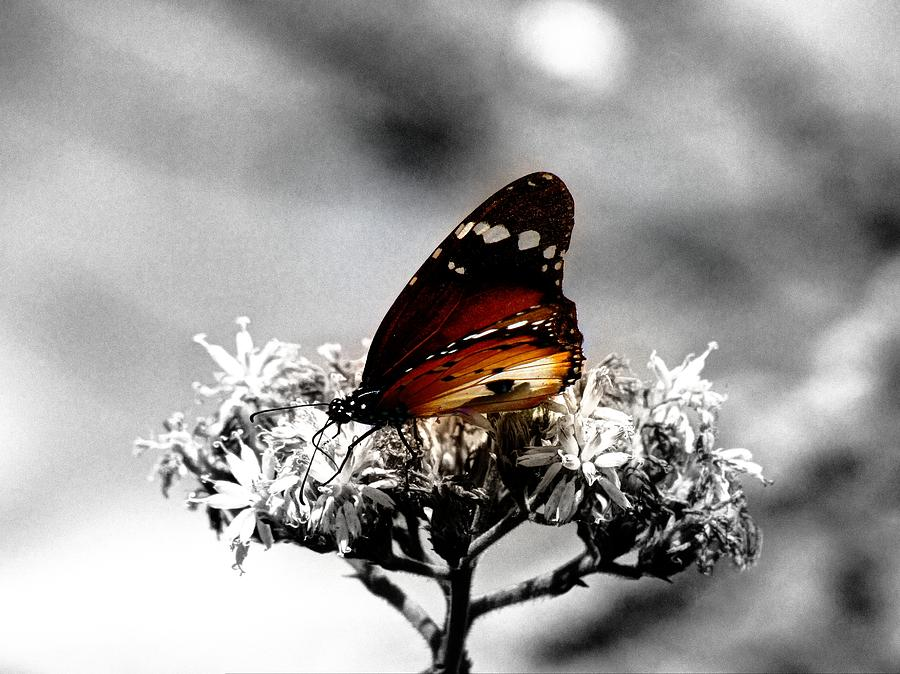 Butterfly In Color Photograph