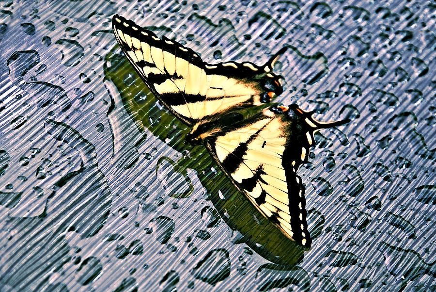 Nature Photograph - Butterfly In Rain by Susan Leggett