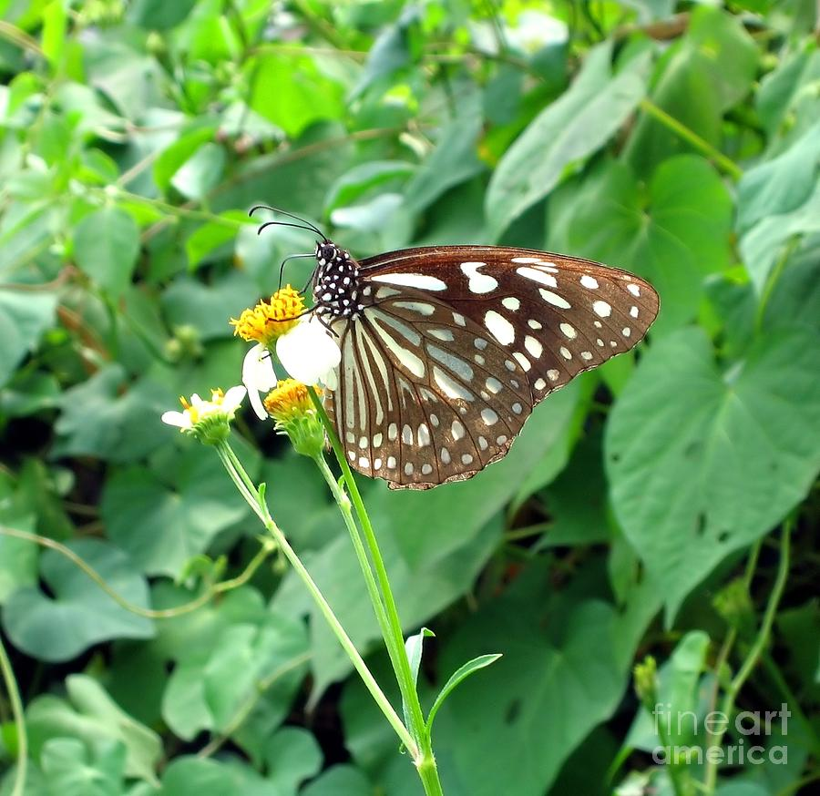 Butterfly Photograph - Butterfly In The Wild by Yali Shi